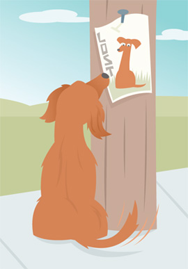 dog looking at lost pet sign