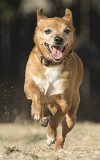 Sparky running free
